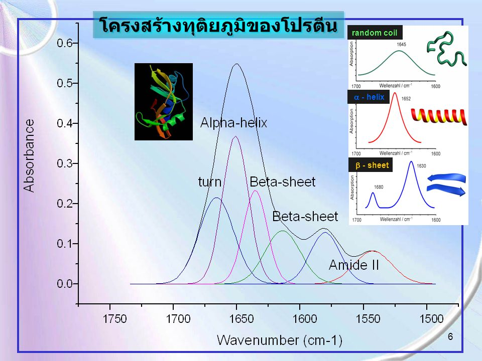 6 random coil  - helix  - sheet โครงสร้างทุติยภูมิของโปรตีน