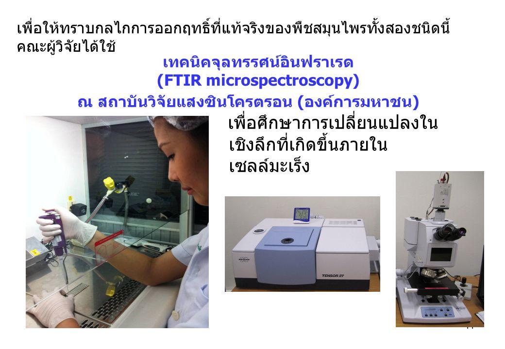 11 เพื่อให้ทราบกลไกการออกฤทธิ์ที่แท้จริงของพืชสมุนไพรทั้งสองชนิดนี้ คณะผู้วิจัยได้ใช้ เทคนิคจุลทรรศน์อินฟราเรด (FTIR microspectroscopy) ณ สถาบันวิจัยแสงซินโครตรอน (องค์การมหาชน) เพื่อศึกษาการเปลี่ยนแปลงใน เชิงลึกที่เกิดขึ้นภายใน เซลล์มะเร็ง