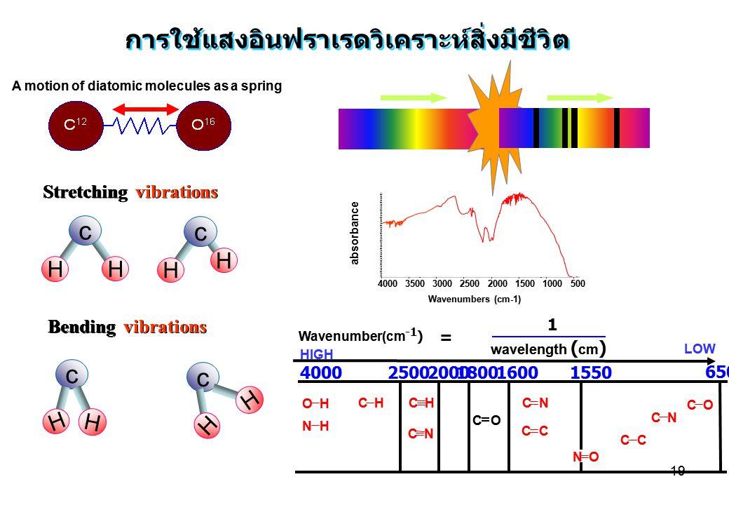 19 การใช้แสงอินฟราเรดวิเคราะห์สิ่งมีชีวิต A motion of diatomic molecules as a spring OH NH CHCH CN C O CN CC NO CC CN CO HIGH LOW 400025002000180016001550 650 Wavenumber(cm -1 ) Stretching vibrations Bending vibrations = 1 wavelength ( cm ) c H H c H H absorbance 500 1000 1500 2000 2500 3000 3500 4000 Wavenumbers (cm-1) c H H c H H