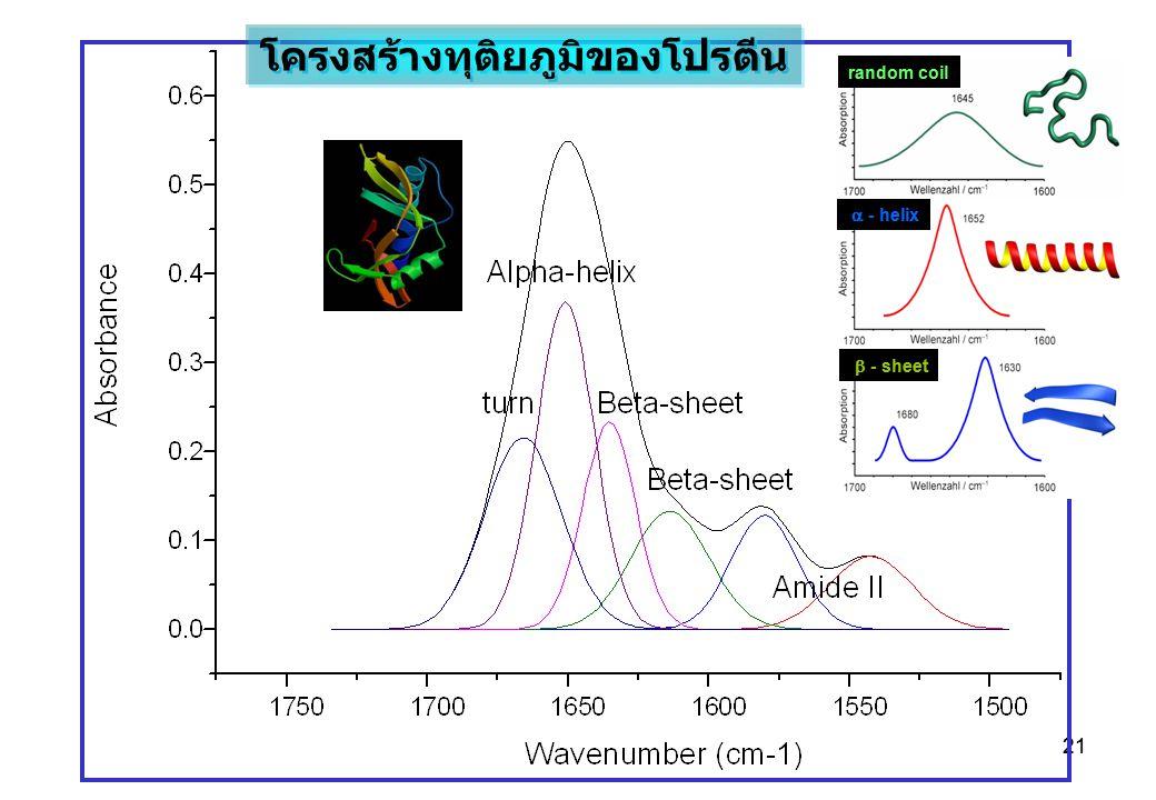21 random coil  - helix  - sheet โครงสร้างทุติยภูมิของโปรตีน