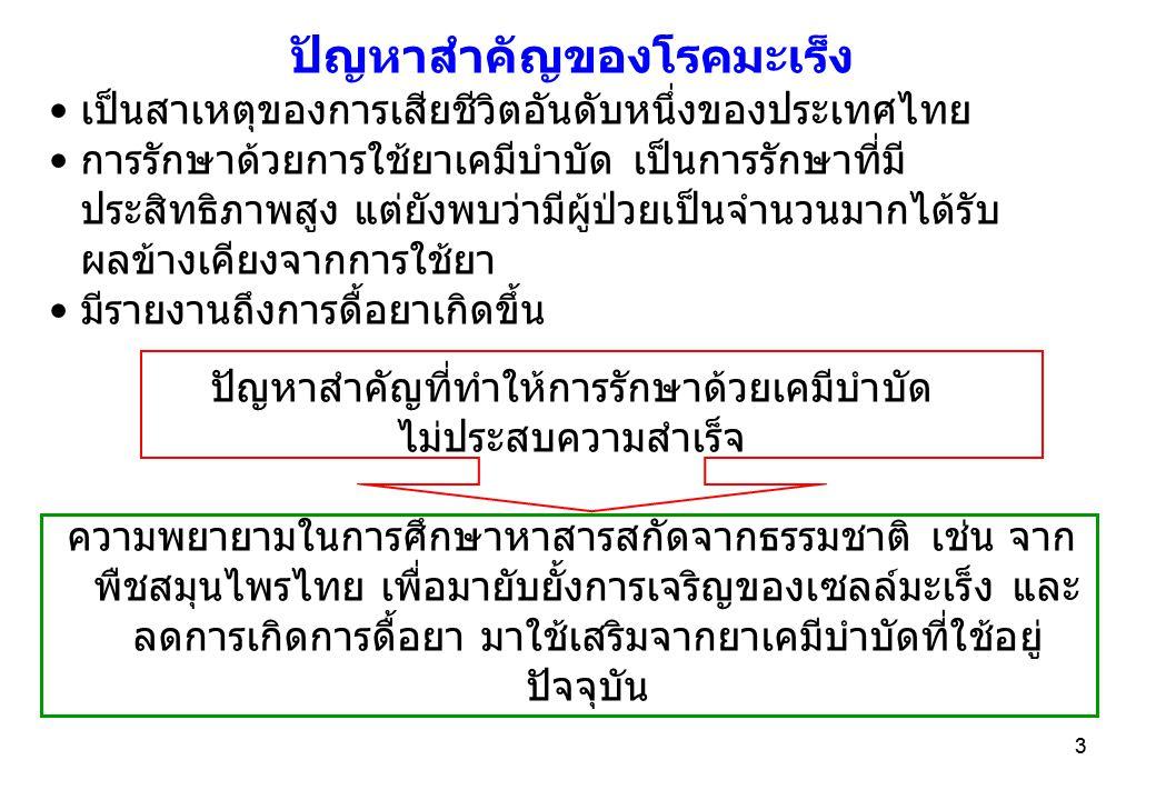 3 ปัญหาสำคัญของโรคมะเร็ง •เป็นสาเหตุของการเสียชีวิตอันดับหนึ่งของประเทศไทย •การรักษาด้วยการใช้ยาเคมีบำบัด เป็นการรักษาที่มี ประสิทธิภาพสูง แต่ยังพบว่ามีผู้ป่วยเป็นจำนวนมากได้รับ ผลข้างเคียงจากการใช้ยา •มีรายงานถึงการดื้อยาเกิดขึ้น ปัญหาสำคัญที่ทำให้การรักษาด้วยเคมีบำบัด ไม่ประสบความสำเร็จ ความพยายามในการศึกษาหาสารสกัดจากธรรมชาติ เช่น จาก พืชสมุนไพรไทย เพื่อมายับยั้งการเจริญของเซลล์มะเร็ง และ ลดการเกิดการดื้อยา มาใช้เสริมจากยาเคมีบำบัดที่ใช้อยู่ ปัจจุบัน