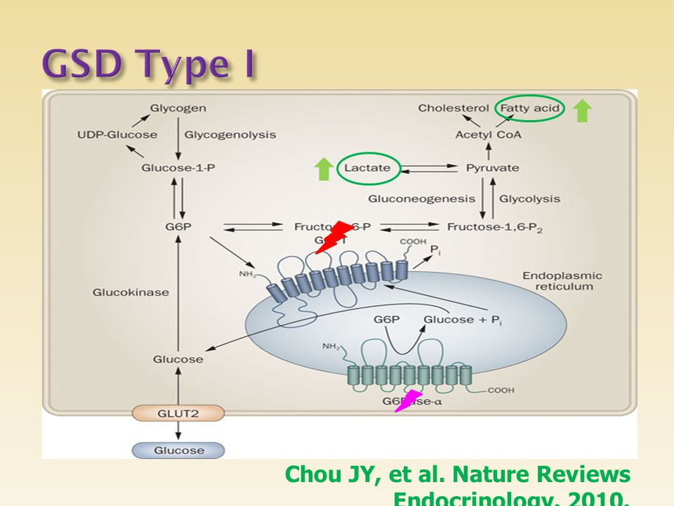 Chou JY, et al. Nature Reviews Endocrinology. 2010.