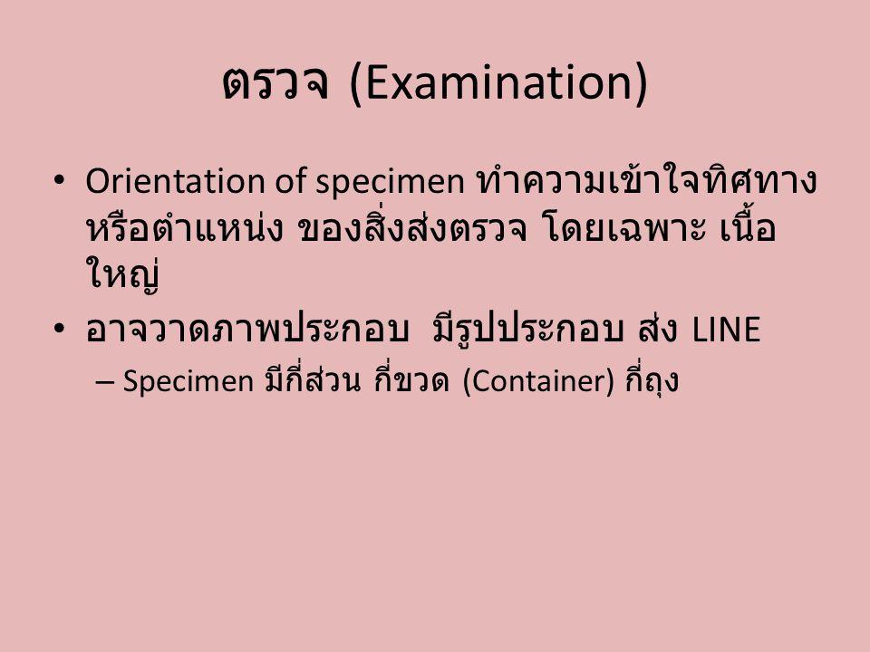 ตรวจ (Examination) Orientation of specimen ทำความเข้าใจทิศทาง หรือตำแหน่ง ของสิ่งส่งตรวจ โดยเฉพาะ เนื้อ ใหญ่ อาจวาดภาพประกอบ มีรูปประกอบ ส่ง LINE – Sp