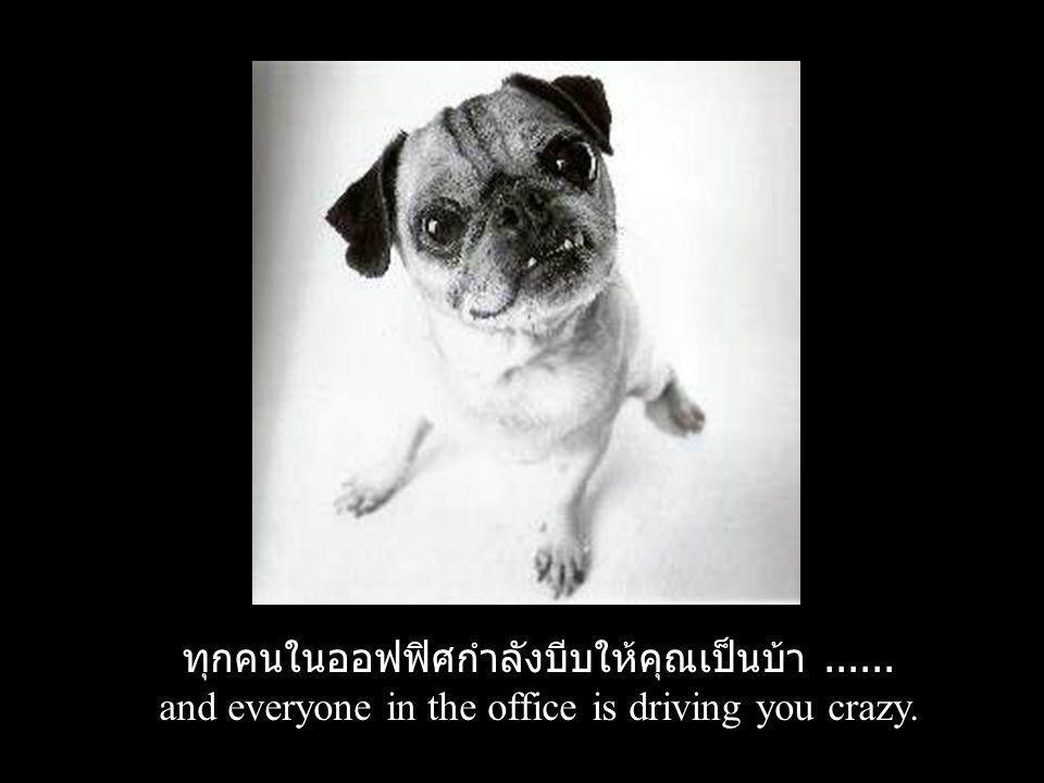 ทุกคนในออฟฟิศกำลังบีบให้คุณเป็นบ้า...... and everyone in the office is driving you crazy.