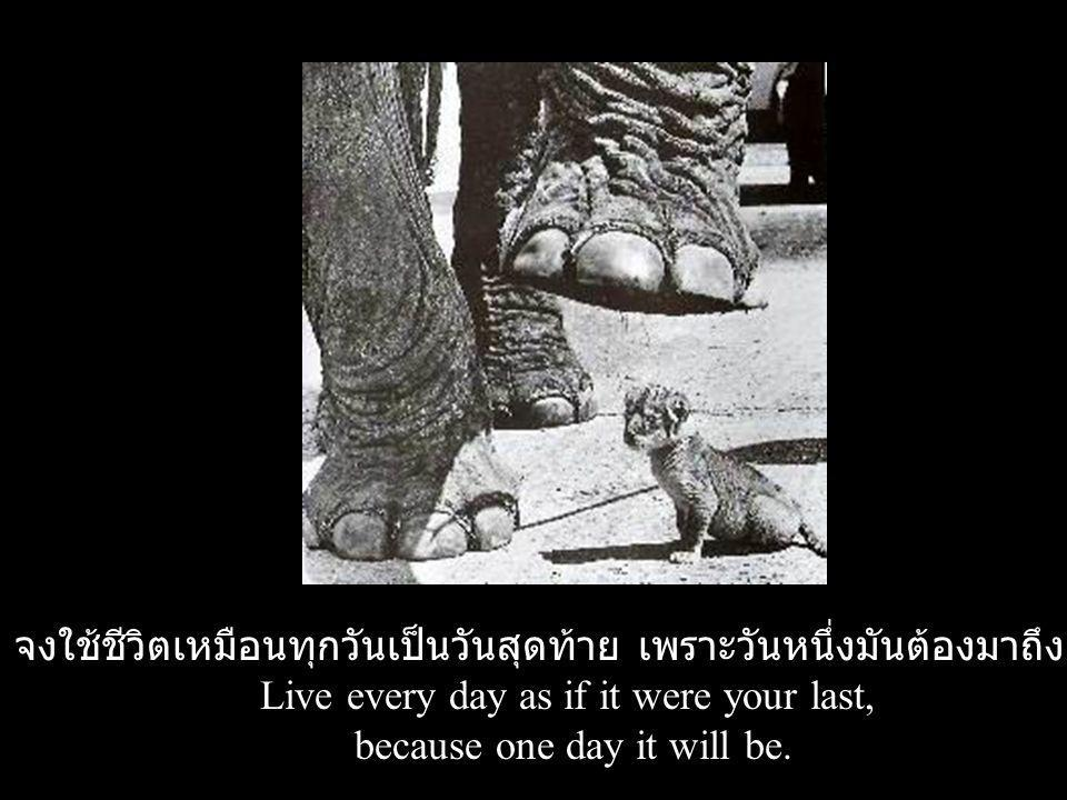 จงใช้ชีวิตเหมือนทุกวันเป็นวันสุดท้าย เพราะวันหนึ่งมันต้องมาถึงแน่ๆ Live every day as if it were your last, because one day it will be.