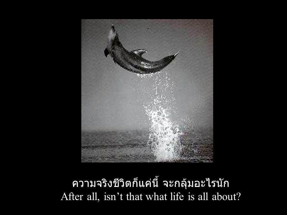 ความจริงชีวิตก็แค่นี้ จะกลุ้มอะไรนัก After all, isn't that what life is all about?