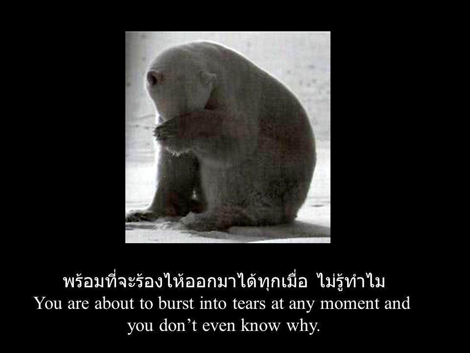 พร้อมที่จะร้องไห้ออกมาได้ทุกเมื่อ ไม่รู้ทำไม You are about to burst into tears at any moment and you don't even know why.