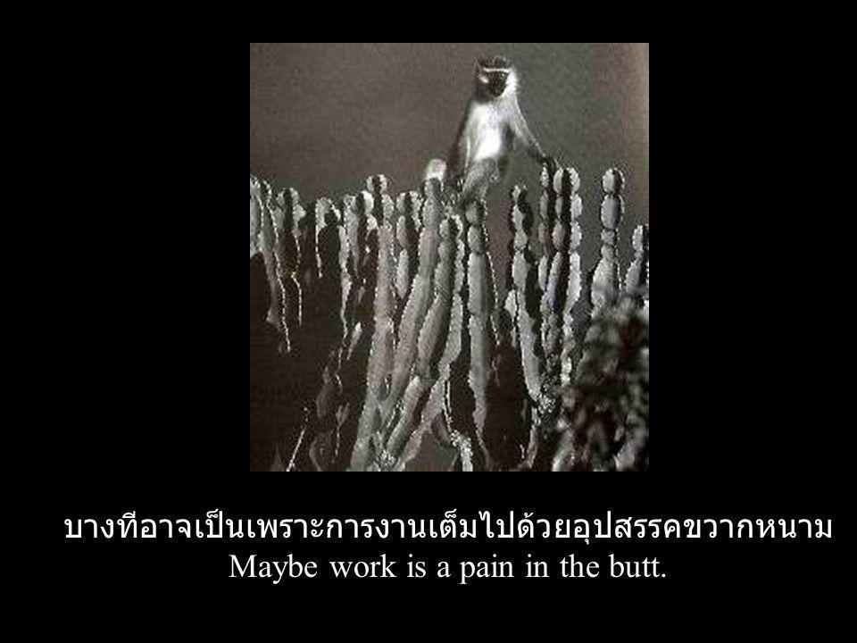 บางทีอาจเป็นเพราะการงานเต็มไปด้วยอุปสรรคขวากหนาม Maybe work is a pain in the butt.