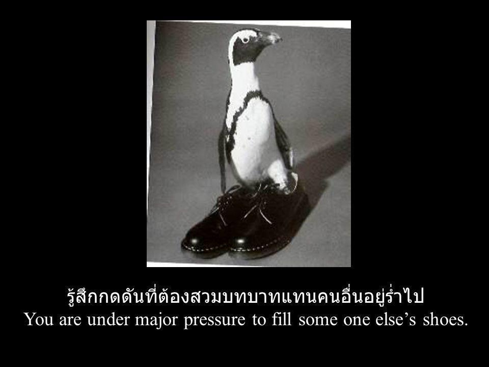 รู้สึกกดดันที่ต้องสวมบทบาทแทนคนอื่นอยู่ร่ำไป You are under major pressure to fill some one else's shoes.