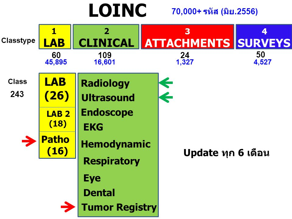 LOINC 1 LAB 2 CLINICAL 3 ATTACHMENTS 4 SURVEYS LAB (26) LAB 2 (18) Radiology Ultrasound Endoscope EKG Hemodynamic Respiratory Eye Dental Classtype Class 6010924 50 Tumor Registry Patho (16) 45,89516,6011,3274,527 70,000+ รหัส ( มิย.2556) 243 Update ทุก 6 เดือน