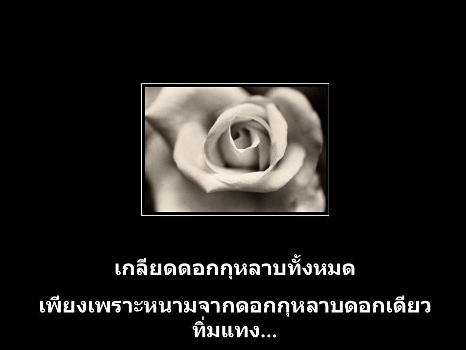 เกลียดดอกกุหลาบทั้งหมด เพียงเพราะหนามจากดอกกุหลาบดอกเดียว ทิ่มแทง...