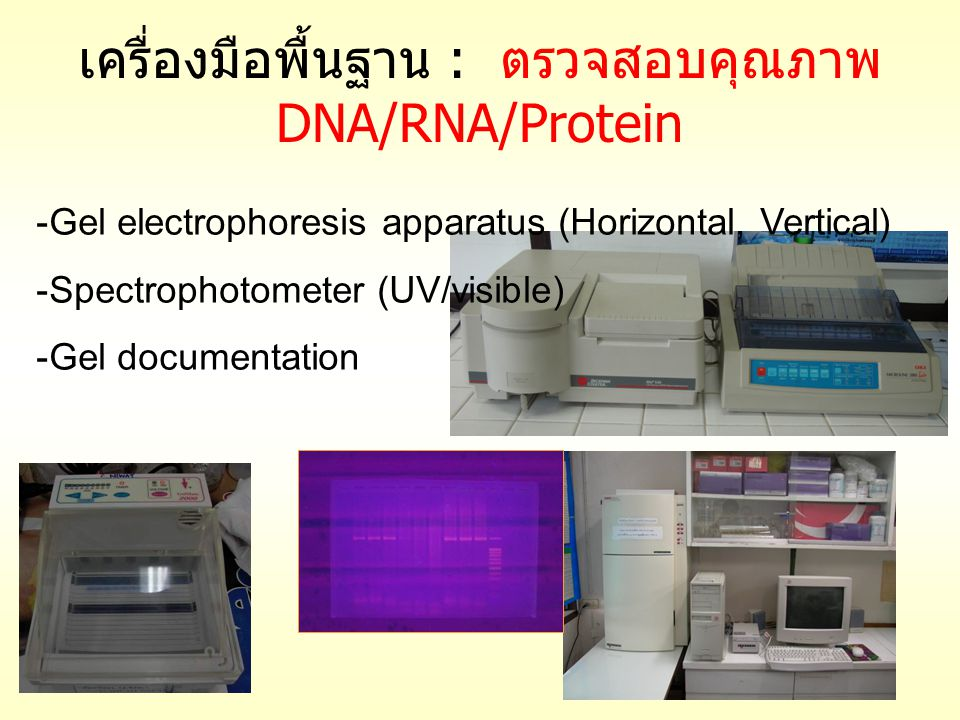 เครื่องมือพื้นฐาน : ตรวจสอบคุณภาพ DNA/RNA/Protein -Gel electrophoresis apparatus (Horizontal, Vertical) -Spectrophotometer (UV/visible) -Gel documenta