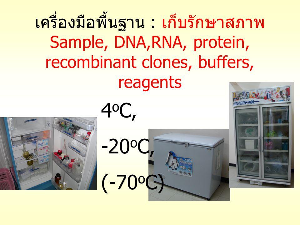 เครื่องมือพื้นฐาน : เก็บรักษาสภาพ Sample, DNA,RNA, protein, recombinant clones, buffers, reagents 4 o C, -20 o C, (-70 o C)