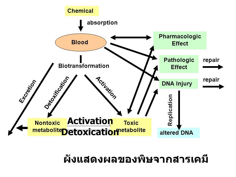 3.มีพิษร้ายแรงจนรักษาให้หายได้ยาก กลุ่มสารโลหะที่เป็นพิษ ( ตามความเป็นพิษ ) 1.