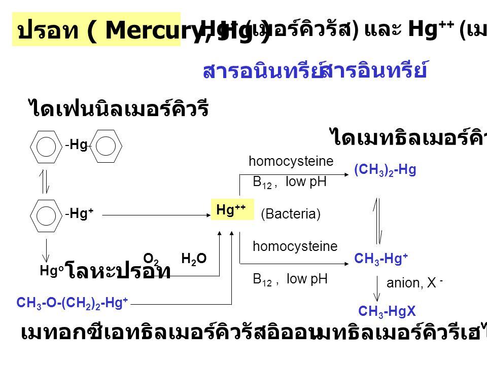 irreversible reaction Hg ++ + 2 RSHR-S-Hg-S-R -SH : โปรตีน, เอนไซม์ ซิสเตอีน โคเอ็นไซม์และในกลูตาไธโอน CH 3 HgCl + RSH R-S-Hg-CH 3 + Hg Non-specific enzyme inhibition Cell membrane Liver, Kidney, Intestine, Muscle, Cardiac muscle, Brain สะสมมากที่ Kidney โรคสั่นกระตุกของคนทำหมวก หรือ Hatter s shakes โรคมินามาต้า
