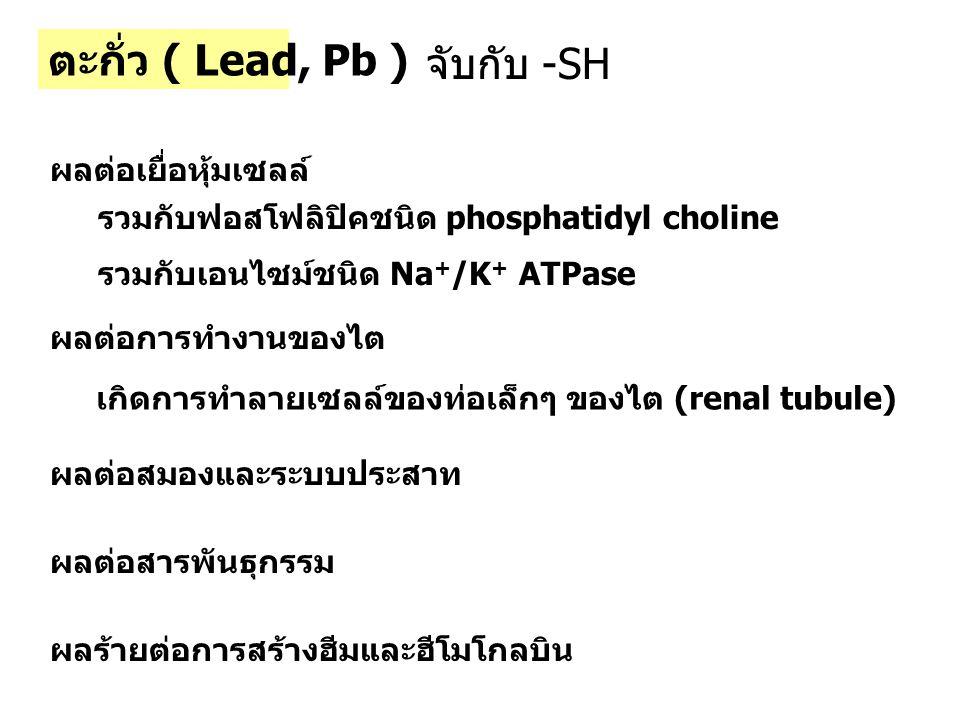 ตะกั่ว ( Lead, Pb ) ผลต่อเยื่อหุ้มเซลล์ รวมกับฟอสโฟลิปิคชนิด phosphatidyl choline รวมกับเอนไซม์ชนิด Na + /K + ATPase ผลต่อการทำงานของไต เกิดการทำลายเซ