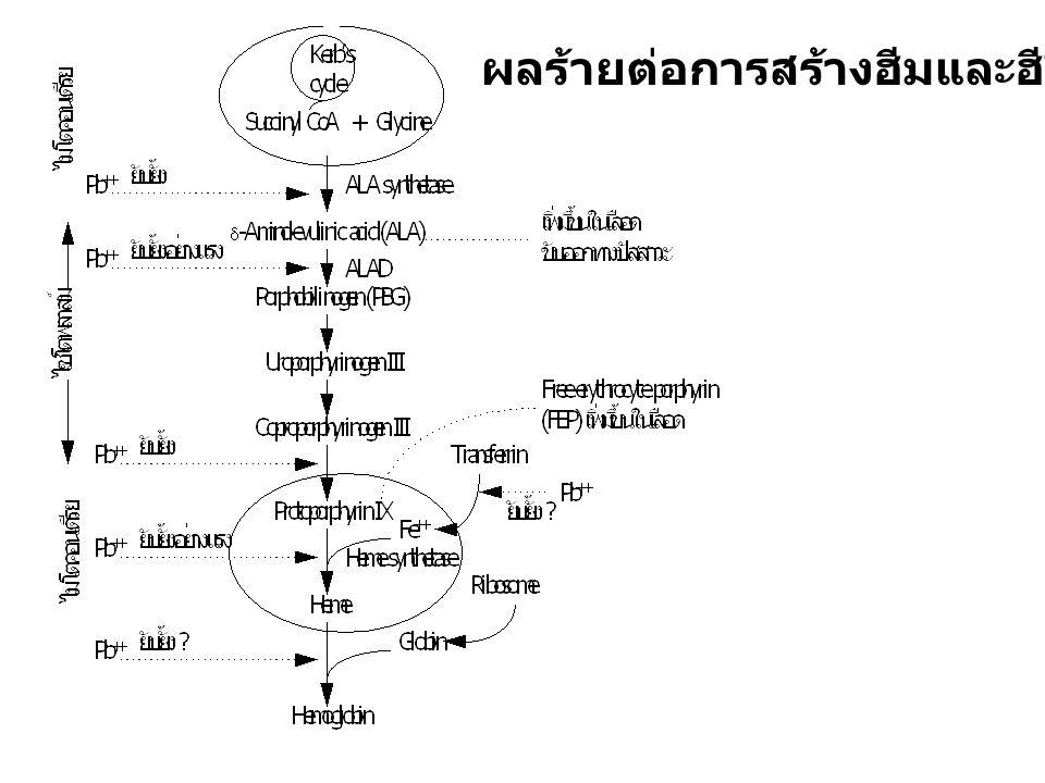 แคดเมียม ( Cadmium, Cd ) โรคอิไต-อิไต (Itai-itai disease) วงแหวนแคดเมียม รอยวงสีเหลืองบริเวณฟันที่ติดกับเหงือก กลไกความเป็นพิษของแคดเมียมที่แท้จริงยังไม่ทราบแน่นอน เชื่อว่ารวมตัวกับ -SH ได้ เข้าทางปอดในลักษณะของฝุ่นละอองหรือไอโลหะ ดูดซึมเข้าได้ประมาณ 8% Cd-BAL complex สลายตัวแยกออกจากกันได้ที่ไต ไปที่ ไต ตับ กระดูก เนื้อเยื่อต่างๆ ทำให้กระดูกและไตพิการ ทำให้ความดันโลหิตสูง