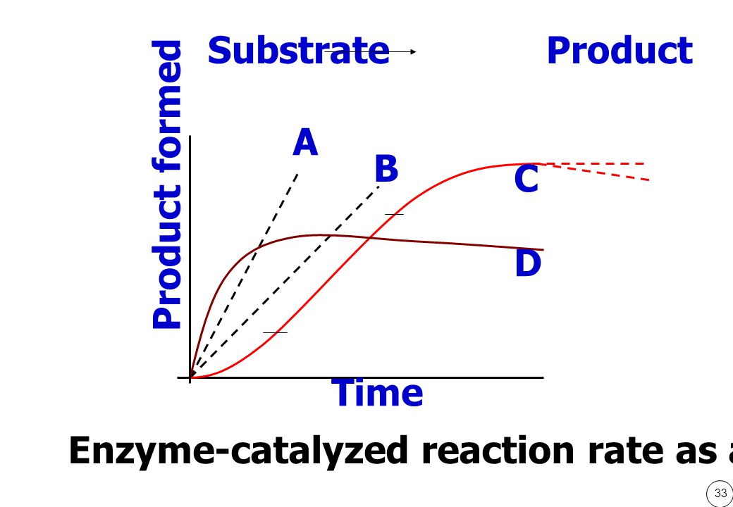 33 Time Product formed A B C D Enzyme-catalyzed reaction rate as a function of time Substrate Product