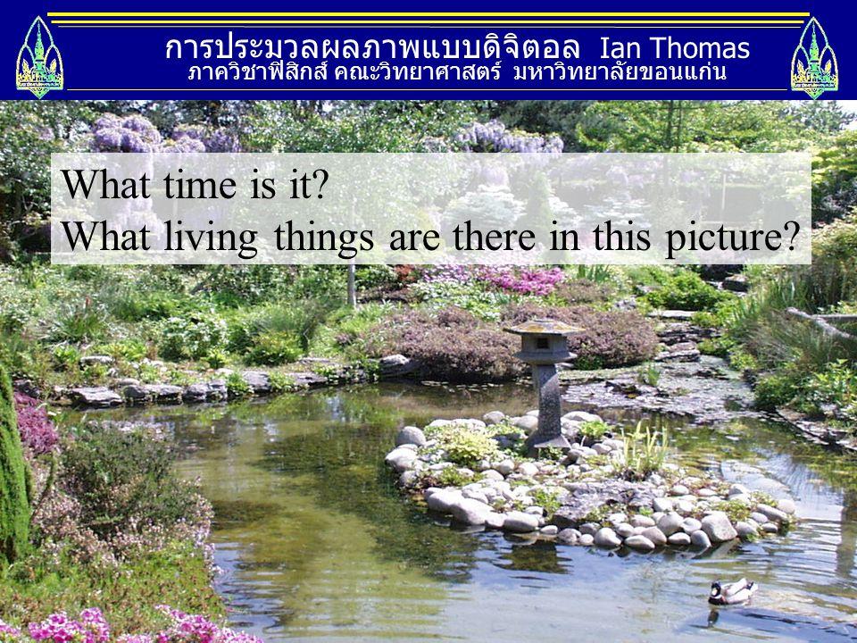 การประมวลผลภาพแบบดิจิตอล Ian Thomas ภาควิชาฟิสิกส์ คณะวิทยาศาสตร์ มหาวิทยาลัยขอนแก่น What time is it? What living things are there in this picture?