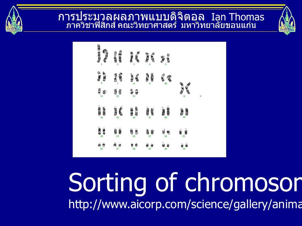 การประมวลผลภาพแบบดิจิตอล Ian Thomas ภาควิชาฟิสิกส์ คณะวิทยาศาสตร์ มหาวิทยาลัยขอนแก่น Sorting of chromosomes http://www.aicorp.com/science/gallery/anim
