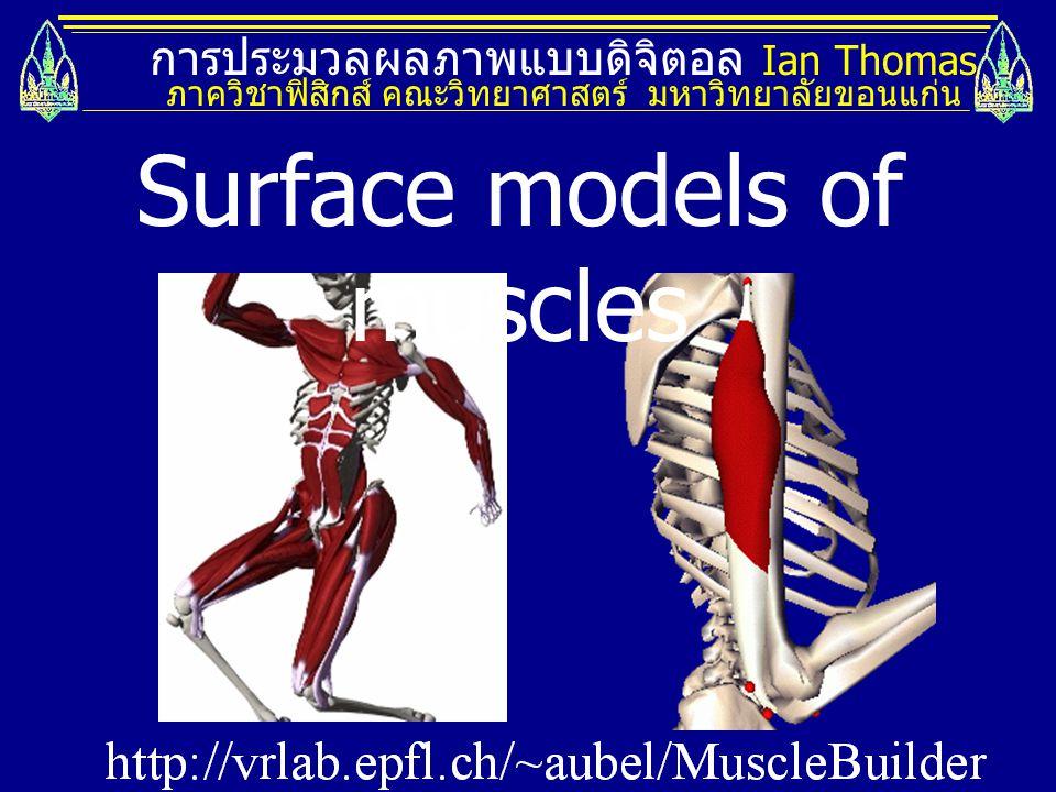 การประมวลผลภาพแบบดิจิตอล Ian Thomas ภาควิชาฟิสิกส์ คณะวิทยาศาสตร์ มหาวิทยาลัยขอนแก่น Surface models of muscles