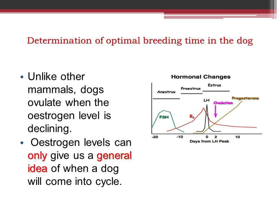 Unlike other mammals, dogs ovulate when the oestrogen level is declining. onlygeneral idea Oestrogen levels can only give us a general idea of when a