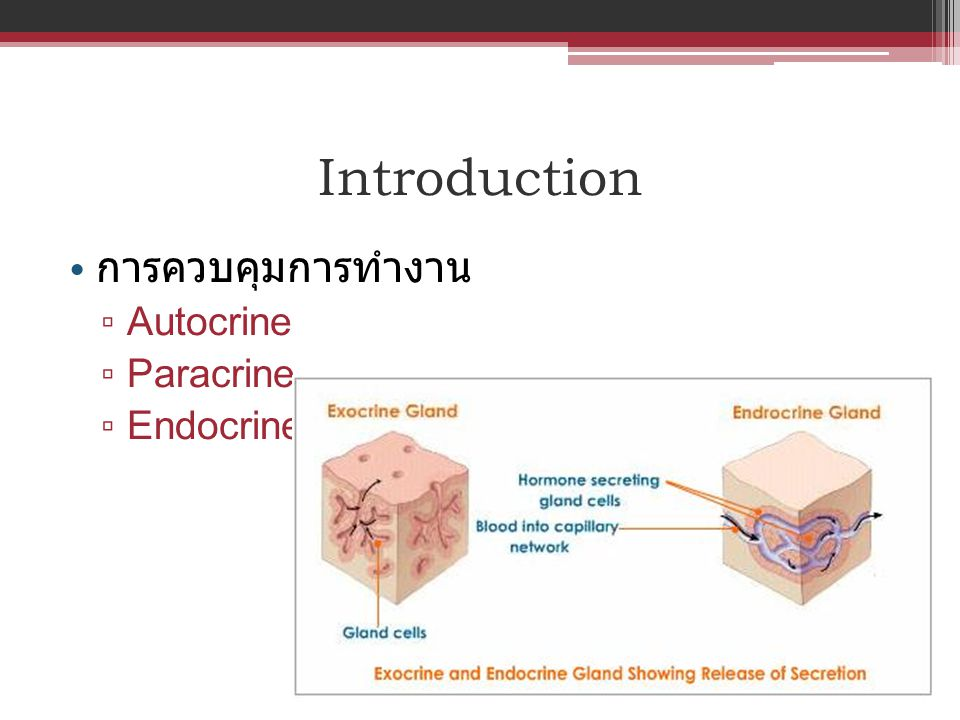 6 Oct 2009 6 Oct 2009 Abortion: one fetus Progesterone level 1.9 ng/mL 7 Oct 2009 at night 7 Oct 2009 at night Deliver 2 living puppies กำไร