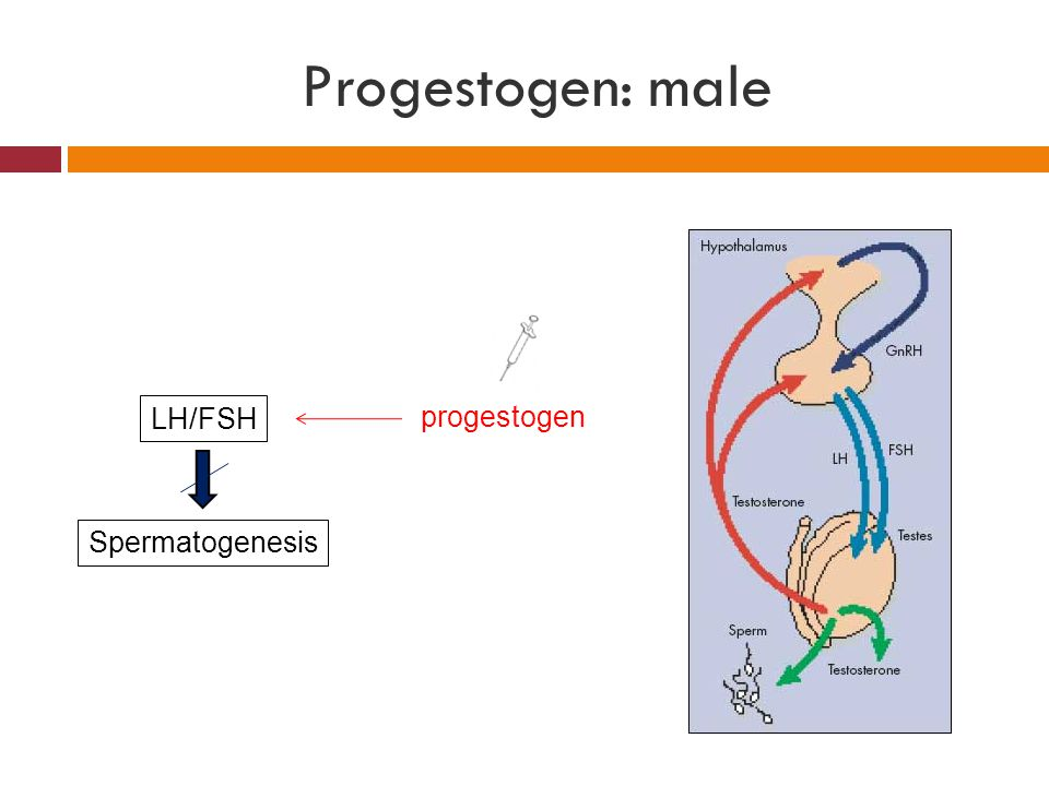 Progestogen: male LH/FSH Spermatogenesis progestogen