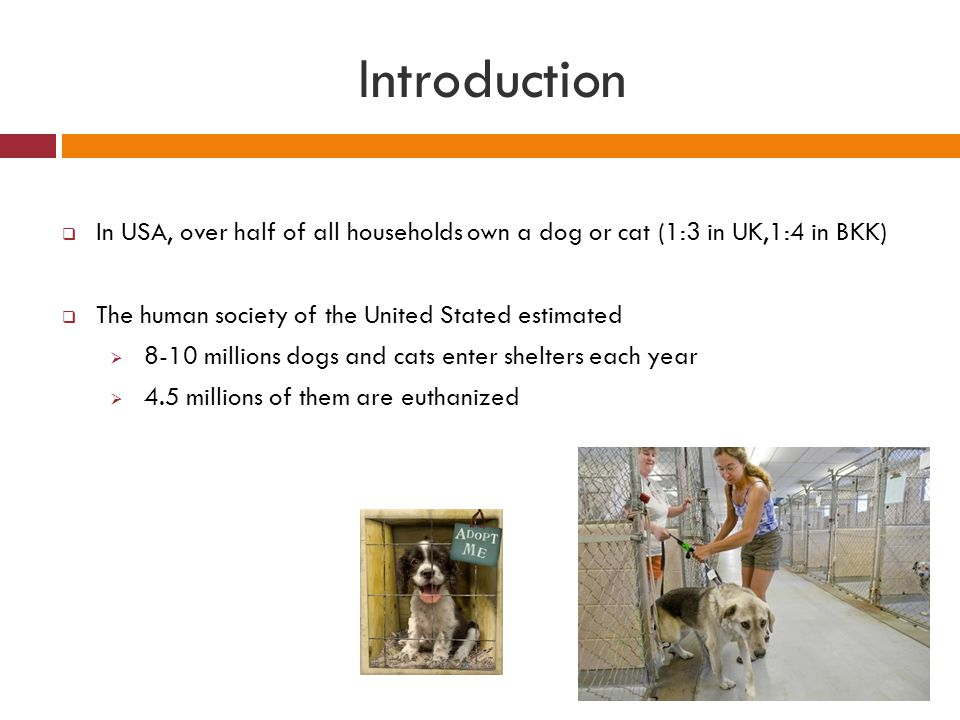 Introduction  In USA, over half of all households own a dog or cat (1:3 in UK,1:4 in BKK)  The human society of the United Stated estimated  8-10 m