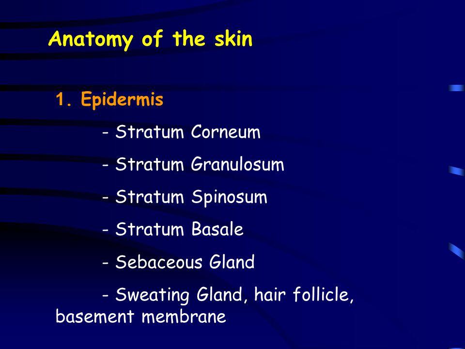 Anatomy of the skin 1. Epidermis - Stratum Corneum - Stratum Granulosum - Stratum Spinosum - Stratum Basale - Sebaceous Gland - Sweating Gland, hair f