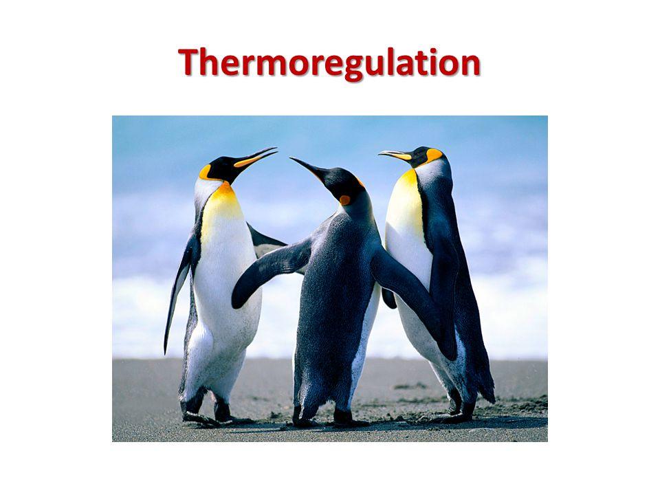 Heat balance Heat supply Heat loss Heat production Perspiration environment 1.