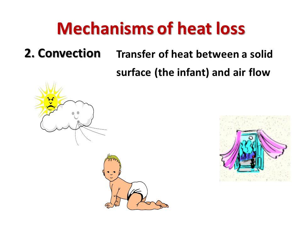 Mechanisms of heat loss 3.