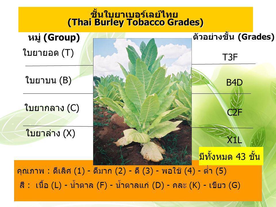 T3F คุณภาพ : ดีเลิศ (1) - ดีมาก (2) - ดี (3) - พอใช้ (4) - ต่ำ (5) สี : เนื้อ (L) - น้ำตาล (F) - น้ำตาลแก่ (D) - คละ (K) - เขียว (G) หมู่ (Group) ใบยา