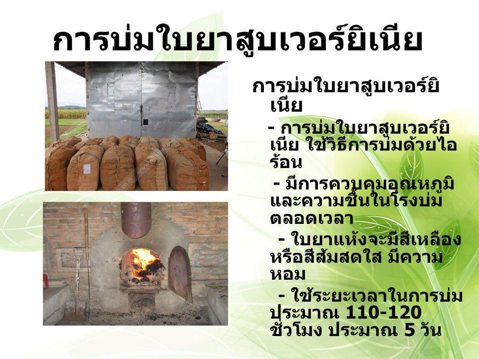 ชั้นใบยาเวอร์ยิเนียไทย (Thai Virginia Tobacco Grades) ใบยาบน (B) X4V คุณภาพ : ดีเลิศ (1) - ดีมาก (2) - ดี (3) - พอใช้ (4) - ต่ำ (5) สี : เหลือง (L) - ส้ม (F) - ติดเขียว (V) - สลิค (S) - เพี้ยน (K) - เขียว (G) หมู่ (Group) ใบยากลาง (C) ใบยาล่าง (X) ตัวอย่างชั้น (Grades) B1F C3L มีทั้งหมด 67ชั้น
