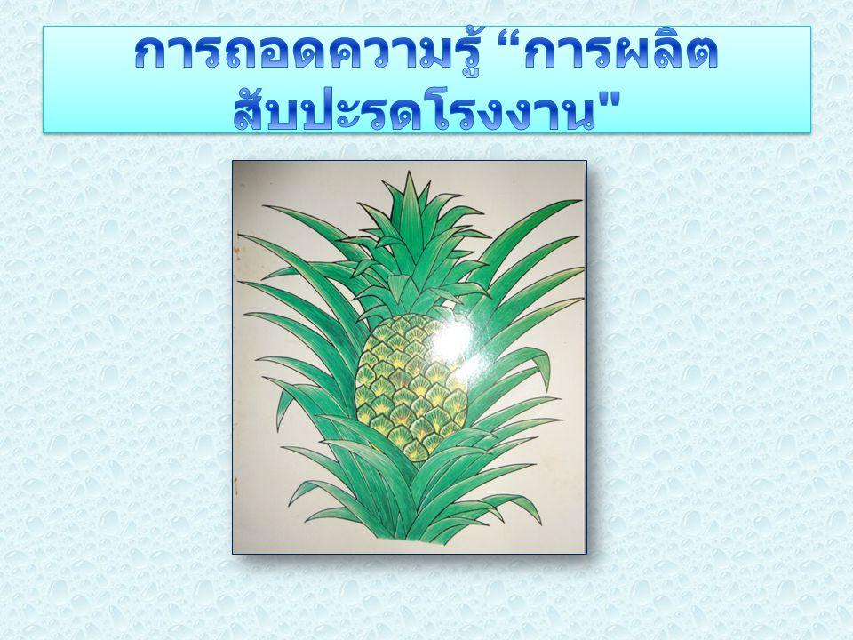 การผลิต สับปะรด อุตสาหกรรม โรงงาน 1.ความสำคัญ ทาง เศรษฐกิจ 2.