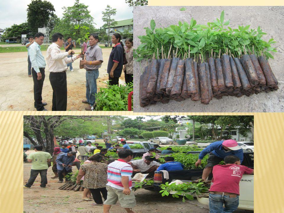  นายศักดิ์ชาย พรหมเรนทร์ เกษตรอำเภอกุด ข้าวปุ้น และเจ้าหน้าที่สำนักงานเกษตร  กุดข้าวปุ้น ดำเนินการจ่ายต้นพันธุ์ยางพาราตาม โครงการส่งเสริมการปลูกยางพารา งบพัฒนากลุ่ม จังหวัดฯ ปี 2556 ให้แก่เกษตกรผู้เข้าร่วมโครงการ จำนวน 400 คน  คนละ 76 ต้น ณ หอประชุมที่ว่าการอำเภอกุด ข้าวปุ้น จังหวัดอุบลราชธานี  ในวันที่ ๒๙ สิงหาคม ๒๕๕๖