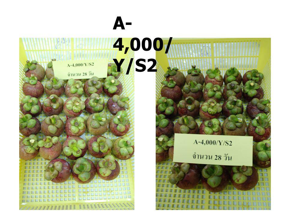 A- 4,000/ Y/S4