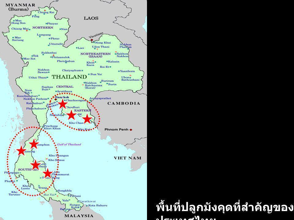 พื้นที่ปลูกมังคุดที่สำคัญของ ประเทศไทย