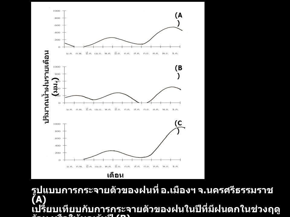 รูปแบบการกระจายตัวของฝนที่ อ. เมืองฯ จ. นครศรีธรรมราช (A) เปรียบเทียบกับการกระจายตัวของฝนในปีที่มีฝนตกในช่วงฤดู ร้อน หรือให้ผลเว้นปี (B) และในปีที่มีผ