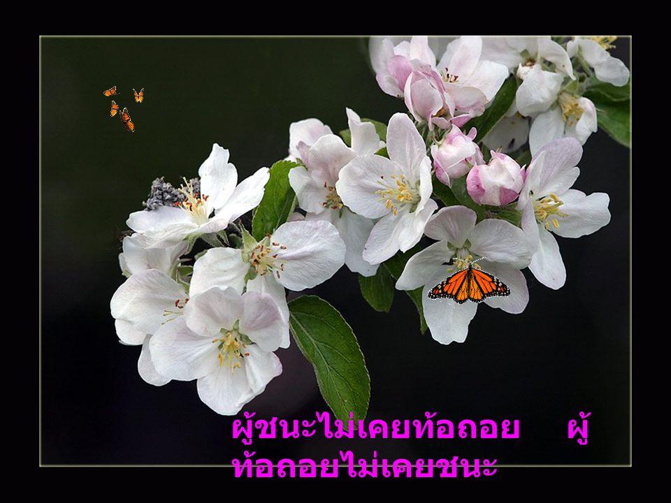 ดอกไม้งามทรามกลิ่น นกบินหนี ดอกกลิ่นดีหอมกาย หมายเข้าหา ดั่งเช่นคนรูปงาม ทราม วาจา ดูเถิดหนา ว่ามีใคร เขาหมายปอง