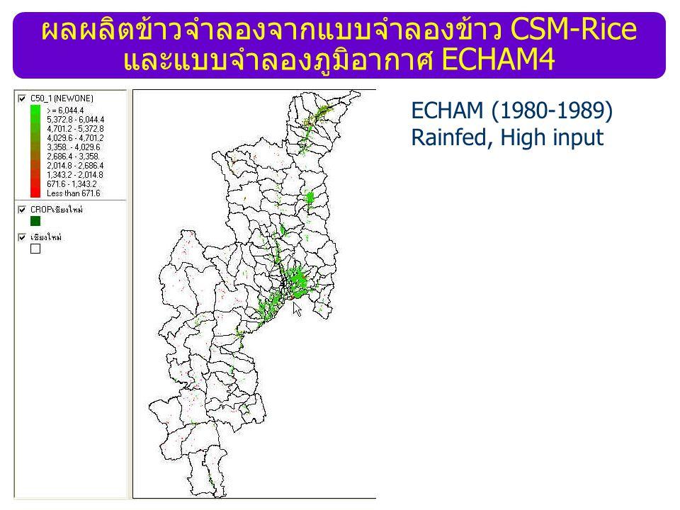 ผลผลิตข้าวจำลองจากแบบจำลองข้าว CSM-Rice และแบบจำลองภูมิอากาศ ECHAM4 ECHAM (1980-1989) Rainfed, High input