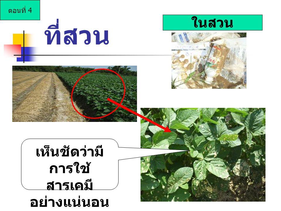 ในสวน เห็นชัดว่ามี การใช้ สารเคมี อย่างแน่นอน ที่สวน ตอนที่ 4