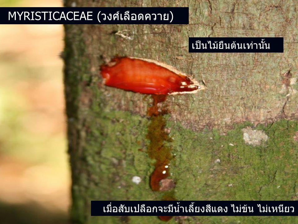 MYRISTICACEAE (วงศ์เลือดควาย) เป็นไม้ยืนต้นเท่านั้น เมื่อสับเปลือกจะมีน้ำเลี้ยงสีแดง ไม่ข้น ไม่เหนียว