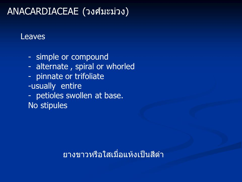 ANACARDIACEAE (วงศ์มะม่วง) Leaves - simple or compound - alternate, spiral or whorled - pinnate or trifoliate -usually entire - petioles swollen at base.