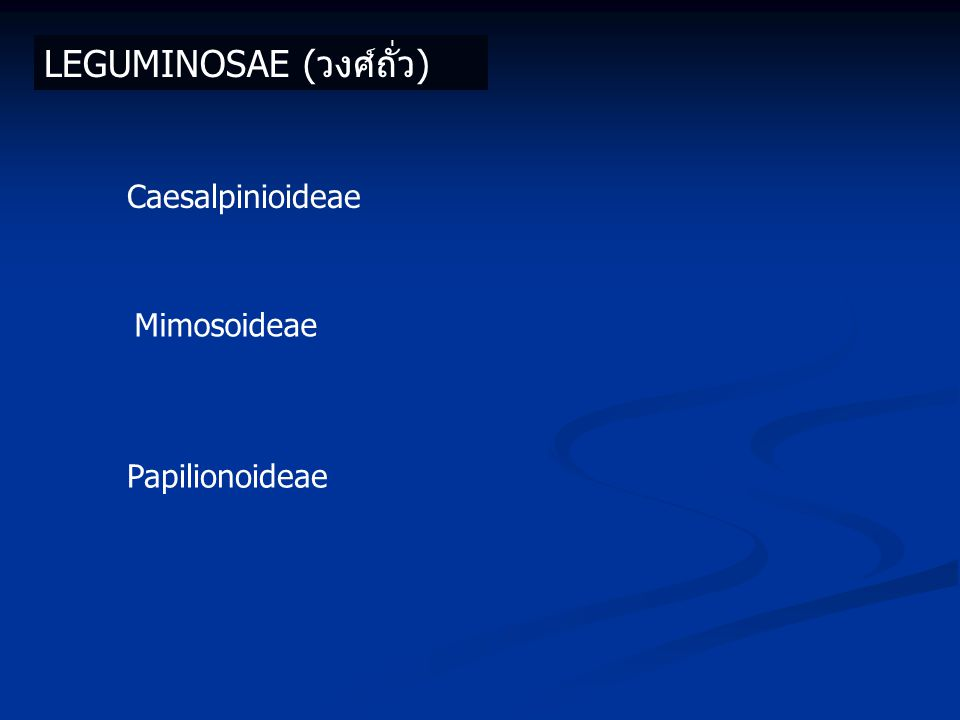 LEGUMINOSAE (วงศ์ถั่ว) Caesalpinioideae Mimosoideae Papilionoideae