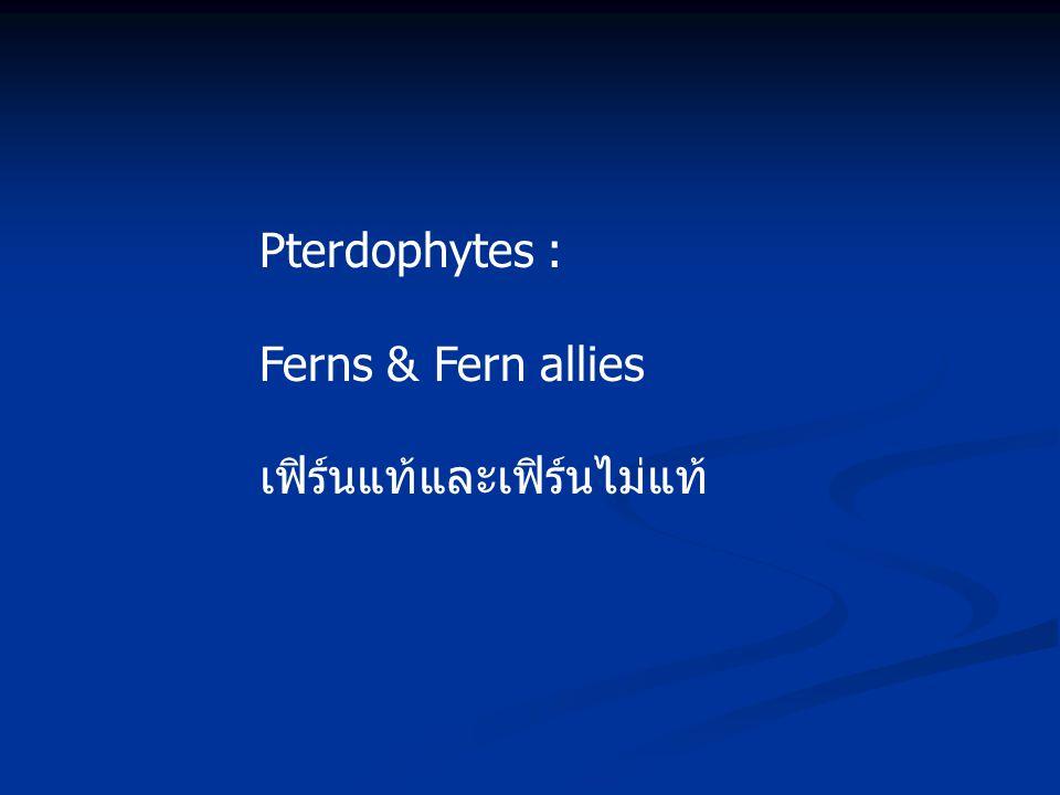 Pterdophytes : Ferns & Fern allies เฟิร์นแท้และเฟิร์นไม่แท้