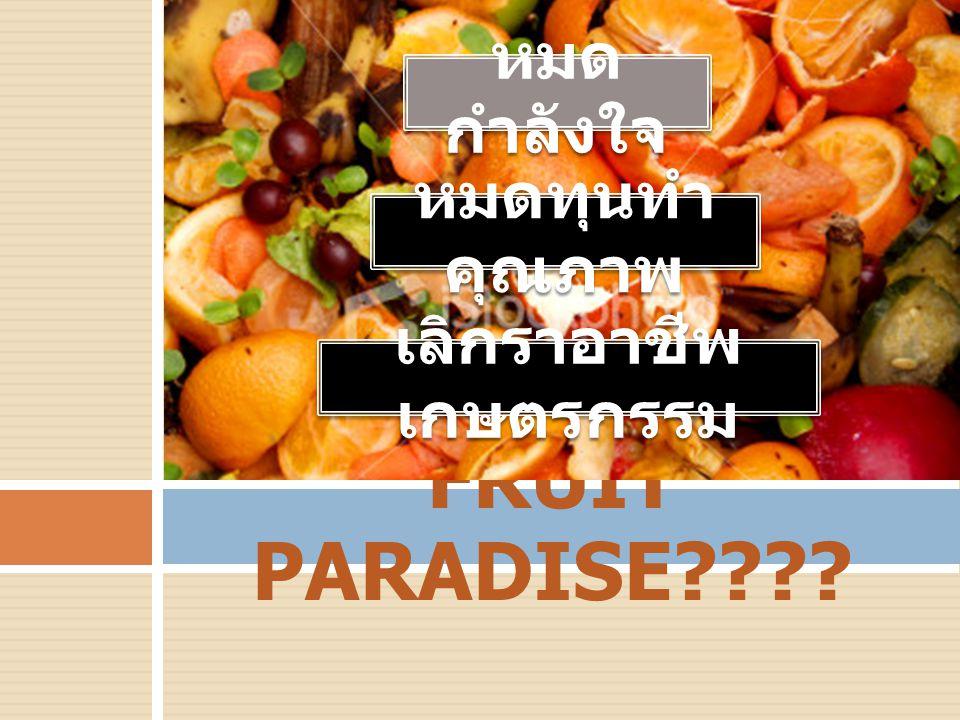 FRUIT PARADISE???? หมด กำลังใจ หมดทุนทำ คุณภาพ เลิกราอาชีพ เกษตรกรรม
