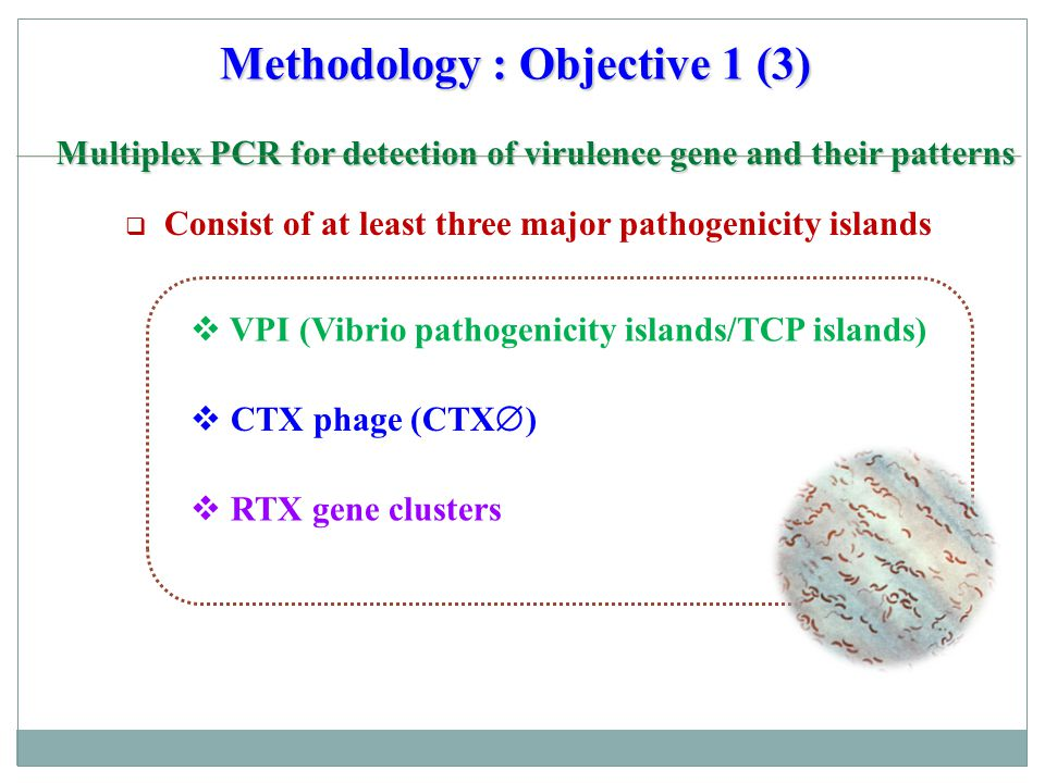 Methodology : Objective 1 (4) Multiplex PCR for detection of virulence gene and their patterns Multiplex PCR for detection of virulence gene and their patterns VPI (Vibrio pathogenicity islands/TCP islands) tcp gene clusters tcpP activates trancription of the toxT gene, essential activor for tcp gene cluster transcription - the major colonization factor - the receptor for CTX  tcpA encoding ToxT, activate ctx and tcp gene clusters toxT