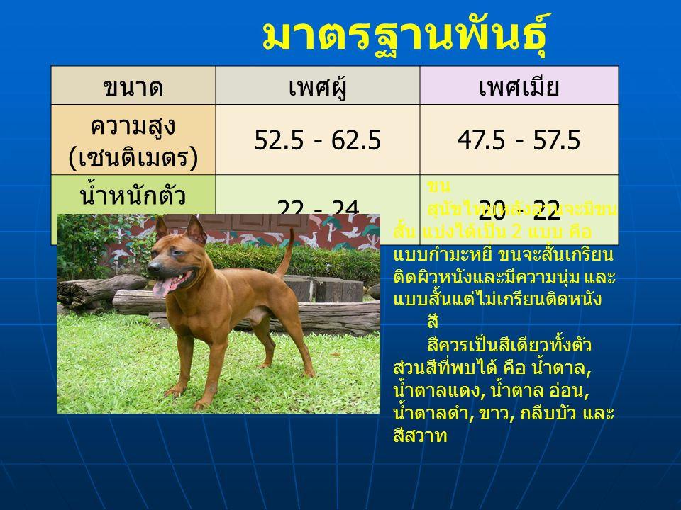 มาตรฐานพันธุ์ ขนาดเพศผู้เพศเมีย ความสูง ( เซนติเมตร ) 52.5 - 62.547.5 - 57.5 น้ำหนักตัว ( กิโลกรัม ) 22 - 2420 - 22 ขน สุนัขไทยหลังอานจะมีขน สั้น แบ่งได้เป็น 2 แบบ คือ แบบกำมะหยี่ ขนจะสั้นเกรียน ติดผิวหนังและมีความนุ่ม และ แบบสั้นแต่ไม่เกรียนติดหนัง สี สีควรเป็นสีเดียวทั้งตัว ส่วนสีที่พบได้ คือ น้ำตาล, น้ำตาลแดง, น้ำตาล อ่อน, น้ำตาลดำ, ขาว, กลีบบัว และ สีสวาท