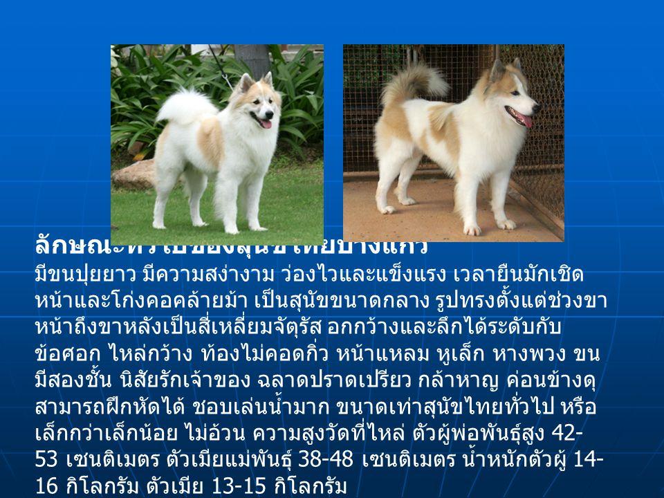 ลักษณะทั่วไปของสุนัขไทยบางแก้ว มีขนปุยยาว มีความสง่างาม ว่องไวและแข็งแรง เวลายืนมักเชิด หน้าและโก่งคอคล้ายม้า เป็นสุนัขขนาดกลาง รูปทรงตั้งแต่ช่วงขา หน้าถึงขาหลังเป็นสี่เหลี่ยมจัตุรัส อกกว้างและลึกได้ระดับกับ ข้อศอก ไหล่กว้าง ท้องไม่คอดกิ่ว หน้าแหลม หูเล็ก หางพวง ขน มีสองชั้น นิสัยรักเจ้าของ ฉลาดปราดเปรียว กล้าหาญ ค่อนข้างดุ สามารถฝึกหัดได้ ชอบเล่นน้ำมาก ขนาดเท่าสุนัขไทยทั่วไป หรือ เล็กกว่าเล็กน้อย ไม่อ้วน ความสูงวัดที่ไหล่ ตัวผู้พ่อพันธุ์สูง 42- 53 เซนติเมตร ตัวเมียแม่พันธุ์ 38-48 เซนติเมตร น้ำหนักตัวผู้ 14- 16 กิโลกรัม ตัวเมีย 13-15 กิโลกรัม